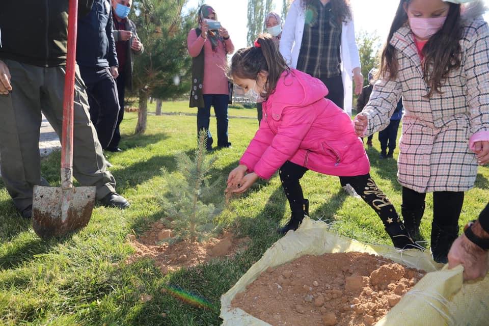 2020 milli agac gunu 3 - 11 Kasım Milli Ağaçlandırma Günü