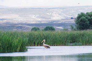 kus cenneti 1 300x200 - Kuş Cenneti Balıkdamı